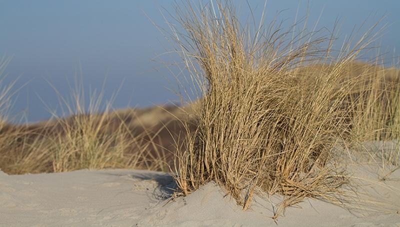 Vakantiehuis-Haamstede-strand-6.jpg